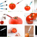 """""""I don't want to eat a tomato that has fish DNA. Breeding in a laboratory is not the same as breeding that happens in nature over hundreds of years."""""""