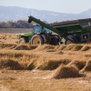 The Increasingly Shaky Foundations of Industrial Agriculture
