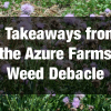 3 Takeaways from the Azure Farms Weed Debacle
