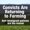 Convicts Are Returning to Farming – Anti-Immigrant Policies Are the Reason