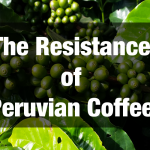 The Resistance of Peruvian Coffee