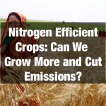 Nitrogen Efficient Crops: Can We Grow More and Cut Emissions?