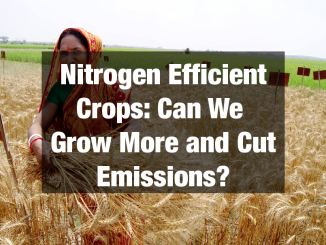 Nitrogen Efficient Crops