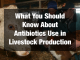 What You Should Know About Antibiotics Use in Livestock Production