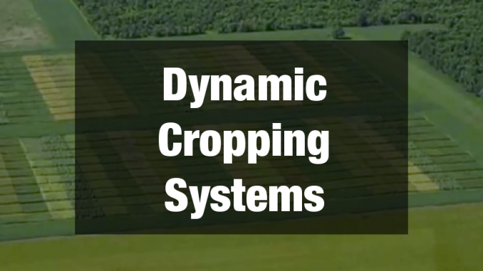 Dynamic Cropping Systems