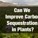 Can We Improve Carbon Sequestration in Plants?