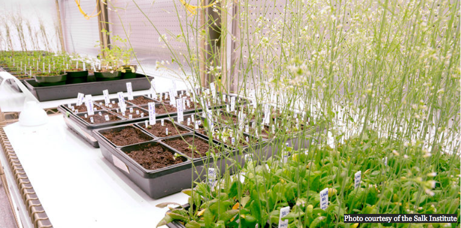 Improving carbon uptake in plants