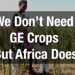 We Don't Need GE Crops But Africa Does