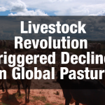 'Livestock Revolution' Triggered Decline in Global Pasture