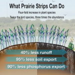 Technique of the Week: Prairie STRIPS