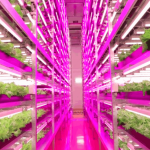 The New Urban Indoor Industrial Agriculture… but Why?