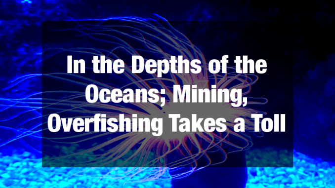 Mining, overfishing takes a toll