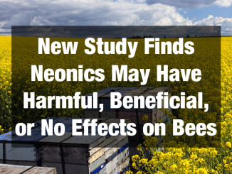 New Study Finds Neonicotinoids May Have Harmful, Beneficial, or No Effects on Bees