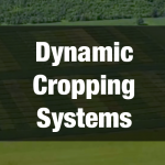 What Farmers Can Do About Climate Change: Dynamic Cropping Systems
